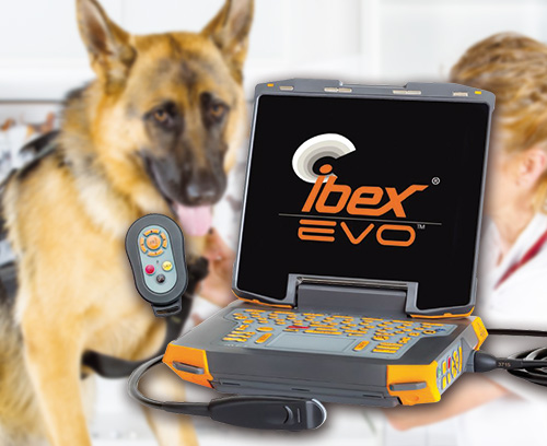 Portable ultrasonic device for veterinary medicine